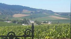 Wine tasting at Simonsig Wine Farm, Capetown Wine Tasting, Farms, Golf Courses, Restaurants, Mountains, Nature, Fun, Travel, Homesteads
