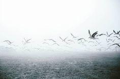 Florida sea fog