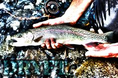 Summer time trout fly fishing