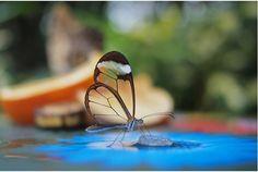 """""""ガラスの羽を持つ蝶""""と呼ばれるこの「Greta oto」、自然界の神秘を映し出しているようで感銘を受けませんか?透明な羽がまる..."""