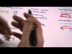 essay body language eye movement