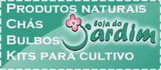 Mini horta de ervas e temperos - Jardim de Flores