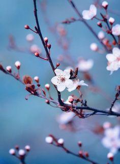 Spring Love III by cimengizem on DeviantArt
