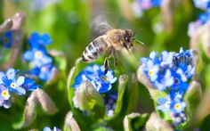 Flowers That Attract Bees To Your Garden