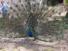 Bird Week Spring 2013 edition