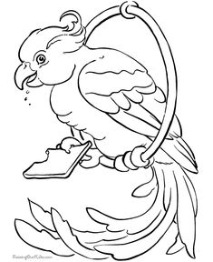 Free Printable Bird Coloring Page Of Parrot