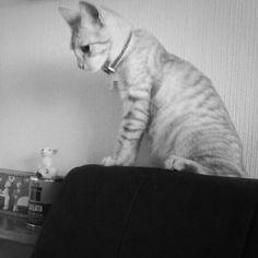 Ray es un gatito reflexivo