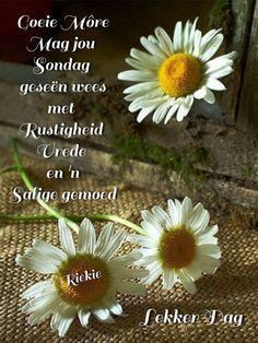 Lekker Dag, Goeie Nag, Goeie More, Afrikaans Quotes, Good Morning Quotes, Blessed, Image, Blessings, Van