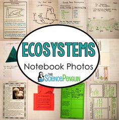 This post is all about ecosystems. I like to combine observations with reading about concepts (testing on its way and all) and practicing vocabulary.