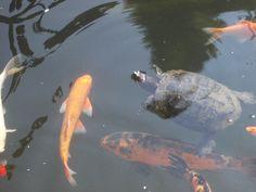rybki z żółwiem