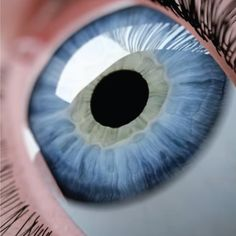 OUR EYES give us the precious gift of sight, but have you ever wondered how they work?