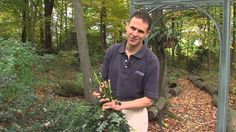 Growing Wisdom garden videos will help you with all your gardening needs. Come back every week for our latest tips on what to do in your yard. Make Your Own, Make It Yourself, Outdoor Christmas, Evergreen, Swag, Tree Shop, Window Boxes, Holiday Decorating, Diy
