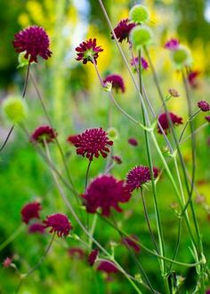 Wonderful Types Of Urban Gardening Ideas. Sensational Types Of Urban Gardening Ideas. Urban Garden Design, Flower Garden Design, Scandinavian Garden, Flower Names, Landscaping With Rocks, Flowers Perennials, Colorful Garden, Flowering Trees, Flowers Nature
