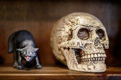 World Wide Photo Walk 2013-34 | by Joseph W. Nienstedt Cat & Skull!