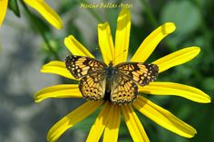 Yellow Beauty by muchobellasartes on Etsy