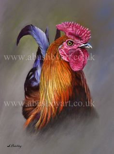 cockerel, Gallery A McKinnon, SAA Professional Members Galleries Rooster Painting, Rooster Art, Chicken Painting, Chicken Art, Art Mignon, Chickens And Roosters, Hens And Chicks, Animal Paintings, Bird Art