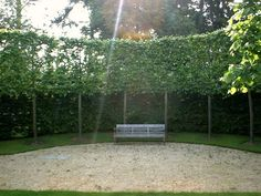 Pleached Trees by morganfweber, via Flickr