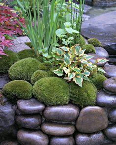 Moss and round stones in Edo no Niwa Edo Garden Rockery Garden, Moss Garden, Bonsai Garden, Garden Landscaping, Small Backyard Design, Garden Design, Backyard Ideas, Chelsea Flower Show, Garden Inspiration