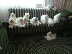 This gives me ideas....... they are just the best dogs !!!!!!!!!