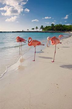 Caribbean Beach with Pink Flamingos