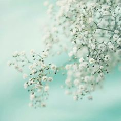 Most Beautiful Spring Photography - CreativeFan White Flowers, Beautiful Flowers, Flowers Pics, Beautiful Beautiful, White Roses, Spring Photography, Texture Photography, Belle Photo, Mint Green