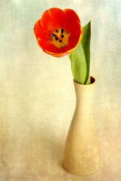 Tulpe by Uta Hansen