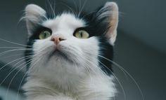 Wonderfull Cat