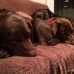 Camouflage chocolate family by labradors4life