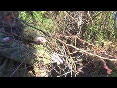 Jak przyciąć Pigwowiec? - YouTube Dandelion, Flowers, Youtube, Plants, Gardening, Dandelions, Lawn And Garden, Plant, Taraxacum Officinale