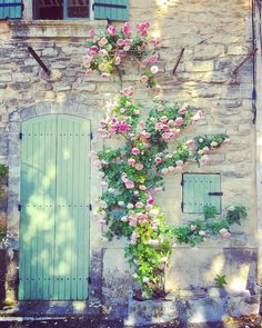 Pink garden roses climbing up a stone facade in the South of France make for a pretty sight. | Photo: @eddieross