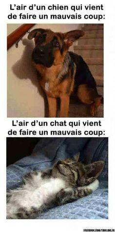 Le chat est toujours innocent voyons