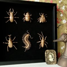 Use plastic bugs for museum DIY Specimen Art - dollar store bugs with gold spray paint Halloween Prop, Classy Halloween, Holidays Halloween, Halloween Crafts, Halloween Decorations, Halloween 2016, Halloween Stuff, Spray Paint Plastic, Painting Plastic