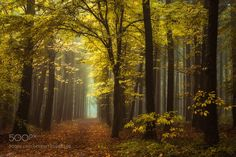 The Last Gold by stanbessems83. @go4fotos