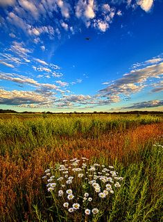 A Morning Field Photograph