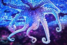 An octopus would be a sick tattoo, I want the tenticles to wrap around my body somewhere. An octopus stands for intelligence & mystery. Kraken, Fotografia Macro, Underwater Life, Deep Blue Sea, Ocean Creatures, Sea And Ocean, Sea World, Ocean Life, Marine Life