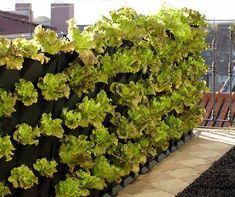 #Minigarden macht auch sonst ungenutzte Flächen wie das Balkongitter zum #Balkongarten. Foto: Minigarden
