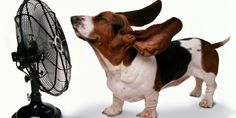 12 Ways Keep Your Home Cool Without Touching The Air Conditioner