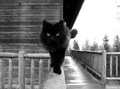 Halloween Special: Black Cats Photos