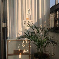 "240 Likes, 11 Comments - 27 , 별 (@byooori) on Instagram: ""이 집 햇빛 잘한다 . . . . #카페#카페스타그램#대봉동카페#대봉동#카페인화"""