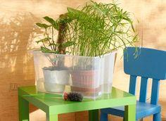 растения на столе, в коробке