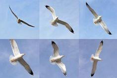 seagulls Photo   Free Download