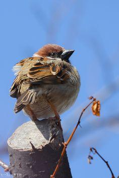 Ptaki wędrowne i jego przyjaciele, jedziemy z powrotem do północnego nieba ~. #…