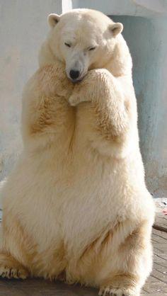 Bear With Us Santuary