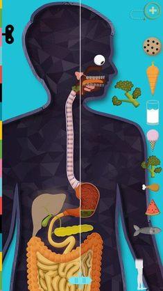App voor uitleg werking menselijk lichaam