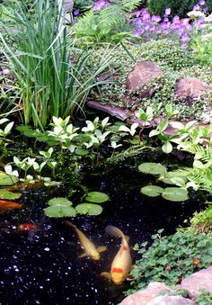 Koi Pond. www.BlueSkyRain.com #Sprinklers #Irrigation #LandscapeLighting