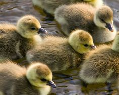 #chicks