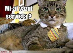 poza-amuzanta-poze-amuzante-pisica-servieta - POZE CU PISICI HAIOASE