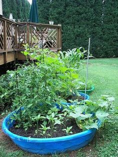 How to Grow Pumpkins in a Container Garden - Yahoo! Voices - voices.yahoo.com. @Kristie Johnson. @Cynthia Coleman