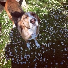 #doglife #spring