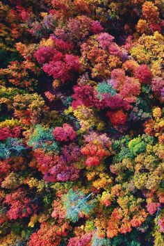 Wallpaper backgrounds flowers winter new ideas Fall Wallpaper, Wallpaper Backgrounds, Wallpapers, Autumn Aesthetic, Autumn Photography, Fall Pictures, Belle Photo, Beautiful World, Mother Nature